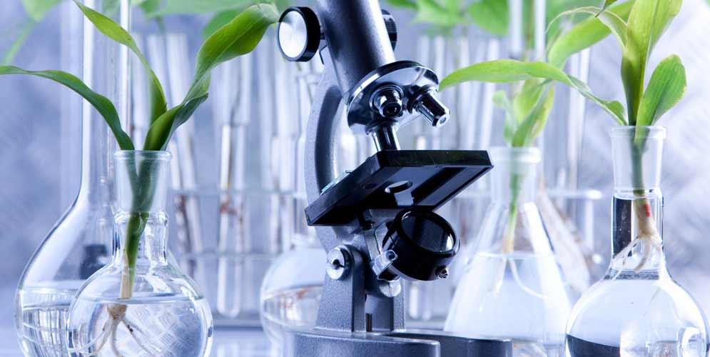 محققان یک مسیر زیستشناختی جدید را در کرمها کشف کردند